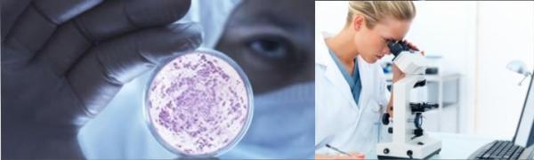 ANALISES CLINICAS E MICROBIOLOGIA CABECALHO
